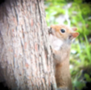 Squirrel_edited.jpg