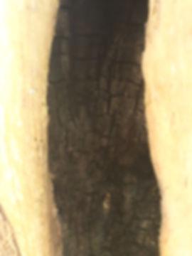 burnt cedar.jpg