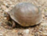 Turtle%201_edited.jpg