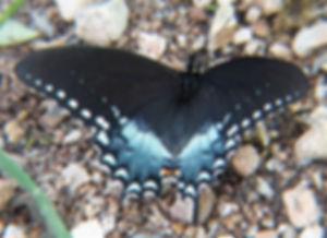 Butterfly%202_edited.jpg