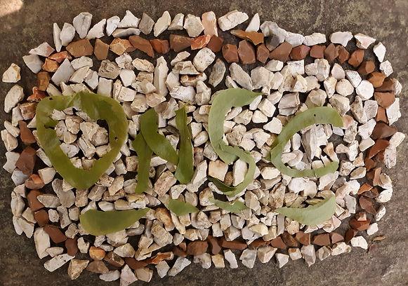 TN Nature Art.jpg