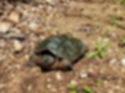 Turtle%202_edited.jpg