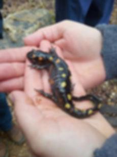 Salamander_edited.jpg