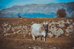 Gacko, Bosnia & Herzegovina