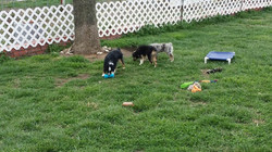 Dog Daycare Play Time