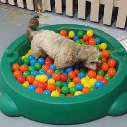 Doggie Daycare Fun