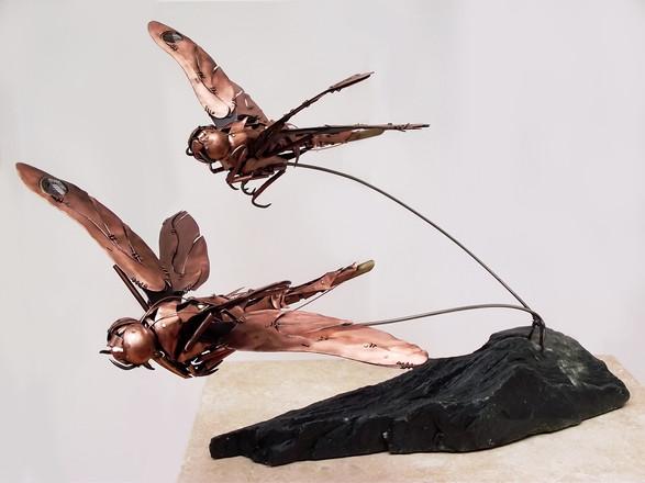Dragonfly 5