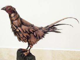 Pheasant Seated 1