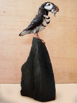 Standing Puffin 17