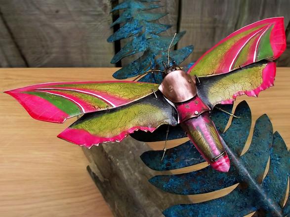Elephant Hawk Moth 1
