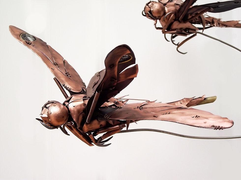 Dragonfly-5-3.jpg