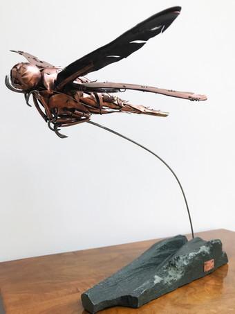Dragonfly 7