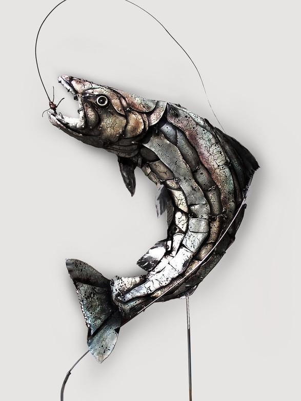 Salmon 1