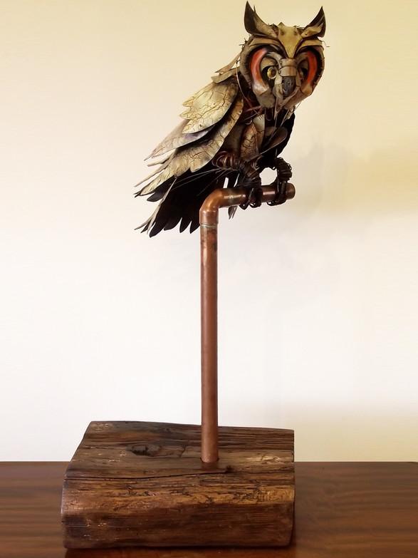 Long Eard Owl 1