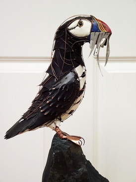 Standing Puffin 15