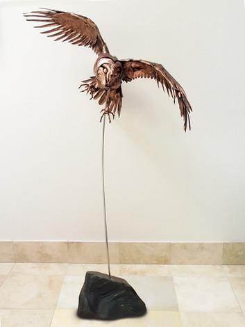 Barn Owl 7