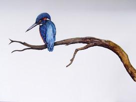 A2 Kingfisher Watercolour