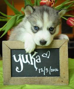 @yuka_wolf_dreams