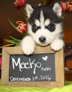 @the.adventures.of.meeko