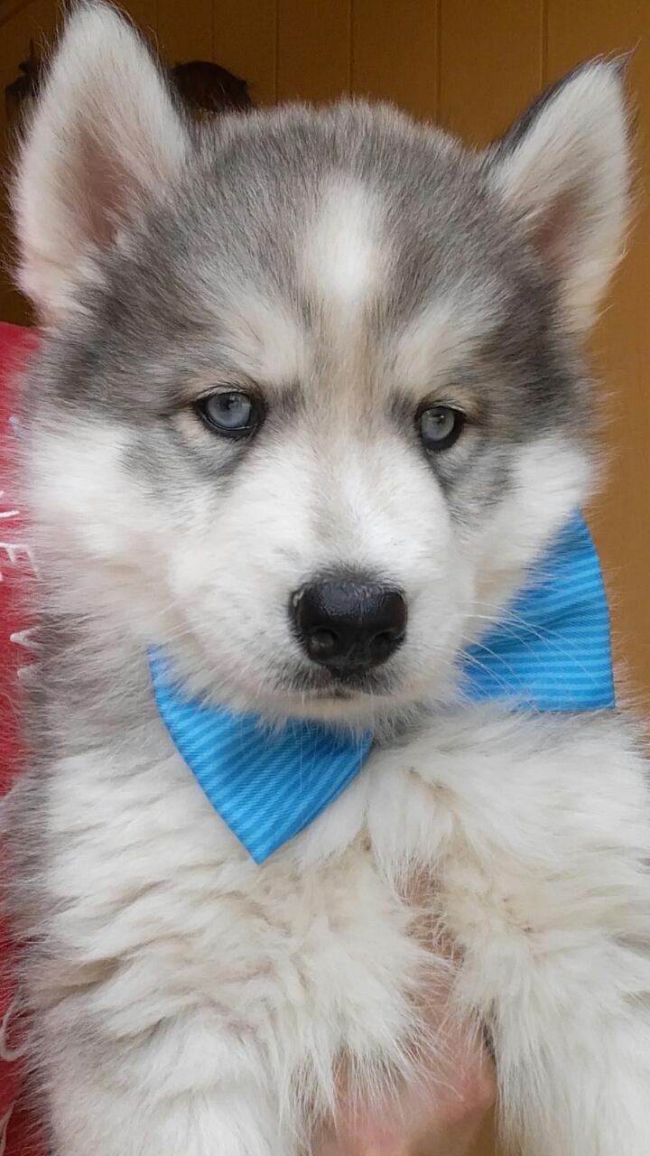 blueeyed boy3
