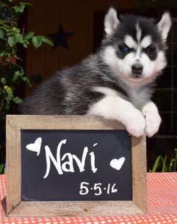 @navi_the_husky