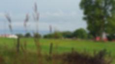 Farm w bluestem.jpg