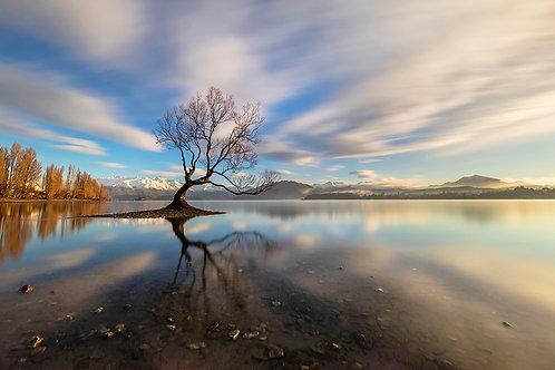 MORNING REFLECTION - UNFRAMED