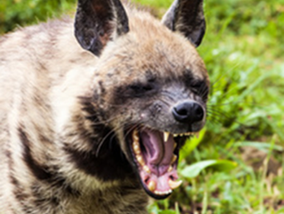 Media Diversity: Why the Hyenas are circling