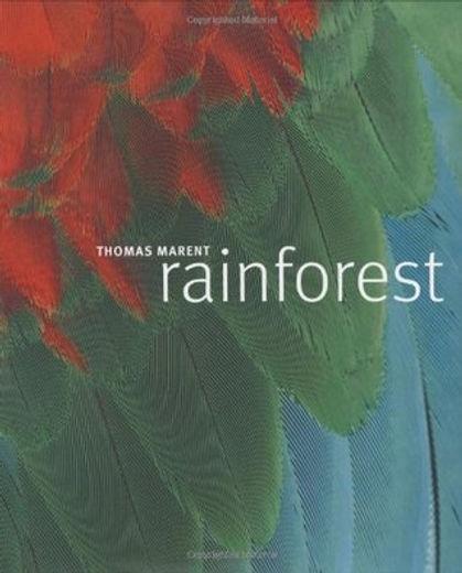 Rainforest thomas marent.jpg