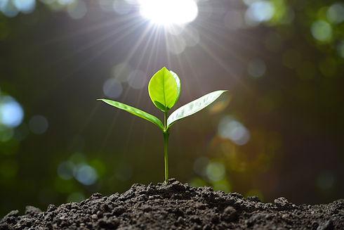seedgrowing.jpg
