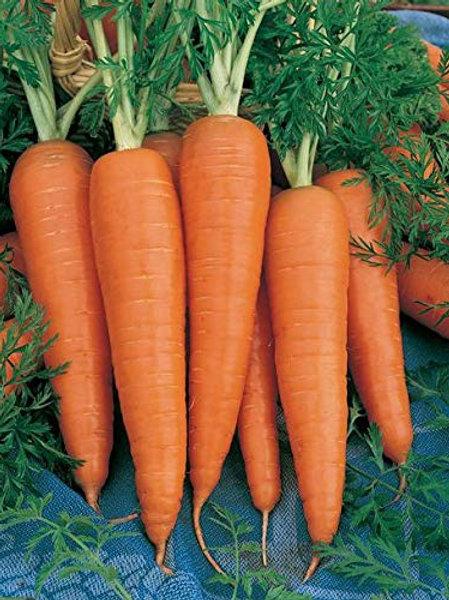 Carrot - गाजर