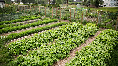 community-garden-beginnings-getty-hero-i
