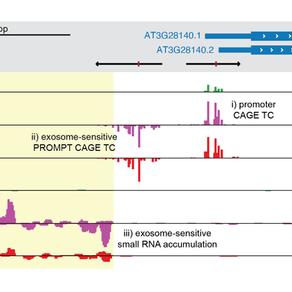 New paper: Antisense transcription in arabidopsis