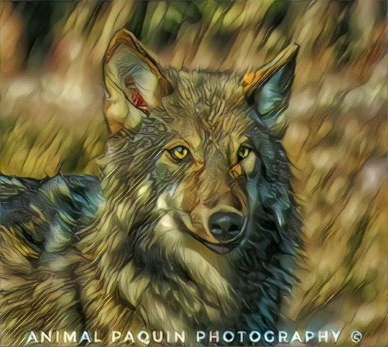 Virée sur la Terre des loups