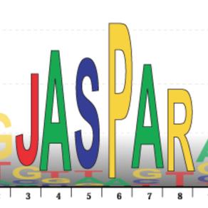New JASPAR database release