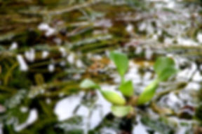 nature-water-reflection-mud-96131.jpg