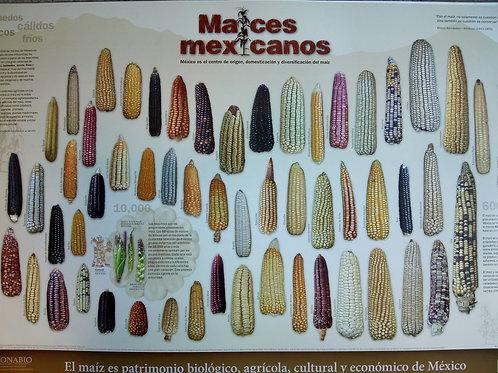 Cartel Conabio Maiz Mexicano