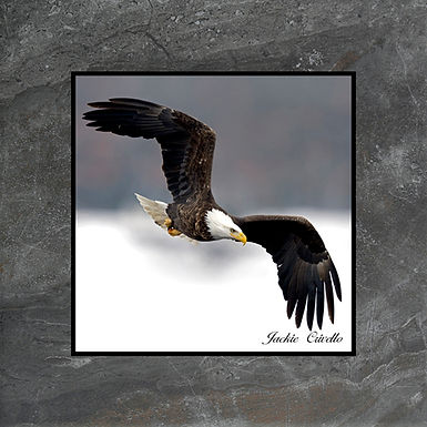 Flight of the Eagle Plaque