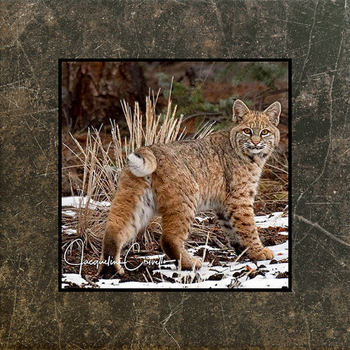 Beautiful Bobcat Plaque