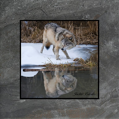 Reflection at Wolf Lake Plaque