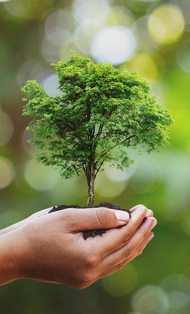 Tree%20planting%20on%20volunteer%20famil