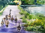 Curious Geese.jpg