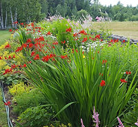 fritzi Mills garden.jpg