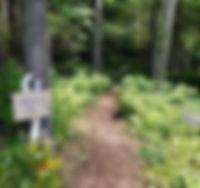 friti's woodland path.jpg