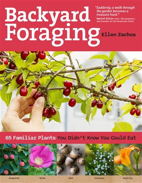 BACKYARD FORAGING: 65 FAMILIAR PLANTS YOU DIDN'T KNOW YOU COULD