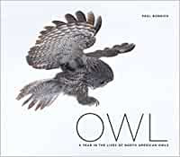 OWL: A YEAR IN THE LIVES OF NORTH AMERICAN OWLS by Paul Bannick