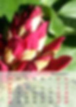 fotografie, kalender, design, grafik, bild,