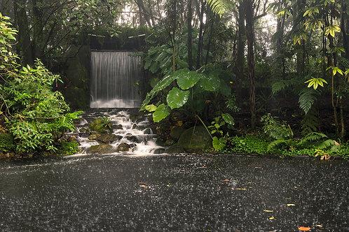 Jardín Botánico José Celestino Mutis - Colombia