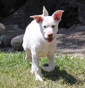 Waylon (Adoption in process)