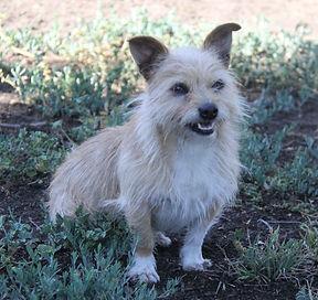 Baxter (Adoption in process)
